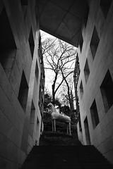 Tokyo Design Center (Architecamera) Tags: modernarchitecture monochrome blackwhite blackandwhite d750