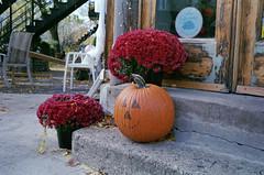 Smiling Pumpkin (Helios 1984) Tags: olympustrip35 zuiko40mm minoltascanner dimageiv konicaminoltadimageiv dimageivscanner c41processing unicolorpresskit filmdevelopingtank yankeefilmtank 35mmfilm fujicolor c41process colorfilm xtra400 fujifilmsuperia colourfilm