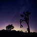 Joshua Tree At Night