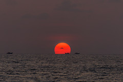 India - Sunset Arabian Sea - Kerala - Mararikulam - 2477 (Peter Goll thx for +14.000.000 views) Tags: arabiansea d850 nikon meer arabischesmeer sea indien ocean kerala mararikulam mararibeach landscape nikond850 seascape landschaft sunset nikkor28300 28300mm alappuzha sonnentuntergang