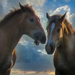TALKING HORSES (lleon1126) Tags: horse horses outdoors animals friendlychallenges
