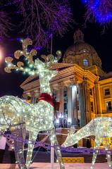 Oh Deer (SteveSmithAB) Tags: alberta legislature rudolph christmas reindeer