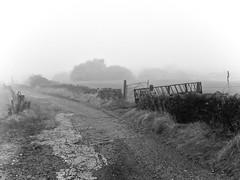 Wishing you all a lovely Christmas Eve 2019 (Missy Jussy) Tags: wishingyouallalovelychristmaseve xmaseve2019 lancashire landscape lane farmland fog iphone