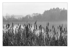 Foggy morning at Lake Kell (werner-marx) Tags: film analog 35mm canonftb meinfilmlab ilforddelta3200 mist fog foggy kellamsee lakekell filmgrain