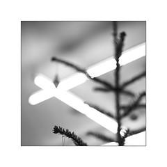 Xmas - different (Armin Fuchs) Tags: arminfuchs xmas square niftyfifty tree lamp universityofmusic würzburg diagonal