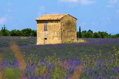 P1140303 (alainazer) Tags: riez provence france fiori fleurs flowers fields champs ciel cielo sky lavande lavanda lavender pierres piedras pietra stones maison casa house