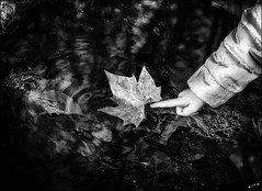 Il était une feuille... /  It was a leaf... (vedebe) Tags: noiretblanc netb nb bw monochrome mains feuille reflets reflections enfant eau