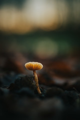 Found one more... (robert.lindholm87) Tags: canon eos eosr canoneosr zeiss zeissmilvus carlzeiss milvus 35mm distagon zeissze mirrorless nature closeup macro bokeh contrejour blur background outside lightroom sweden lowangle colors outdoors forest mushroom fungus bokehballs outoffocus