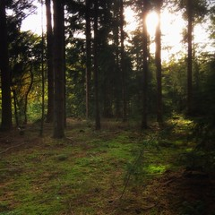 forest 🌲 (Jos Mecklenfeld) Tags: bos wald forest