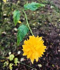 Beautiful yellow (Radu Andrei B) Tags: