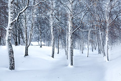 Cottage in a Winter Woodland (jamesromanl17) Tags: winter snow outdoors tree nature cold christmas wood woodland landscape landscapes path cottage walk norway tromsø scandinavia europe forest arctic woods trees ice