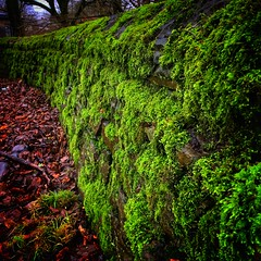 The cemetery wall on Christmas Eve... (David JP64) Tags: lichen moss wall lancashire rossendale bacup cemetery ngc