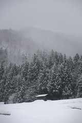 Snowy valley (小川 Ogawasan) Tags: japan japon giappone winter snow