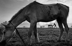 (sharmi_diya06) Tags: street streetphotography streetphot morning animal outside letsexplore nature light natgeoyourshot natgeophotographers natgeophotographer yourshotnatgeo