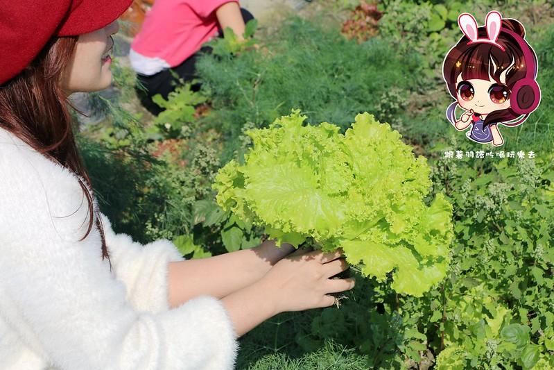 晁陽綠能體驗農場261