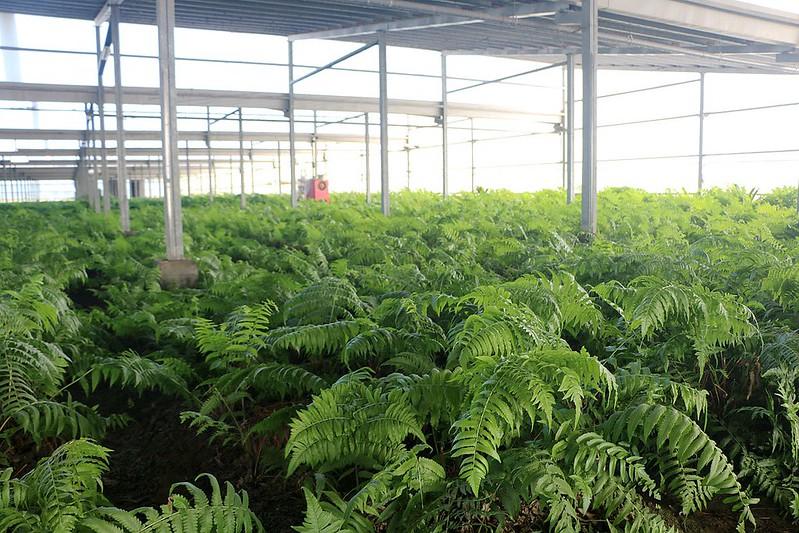 晁陽綠能體驗農場133