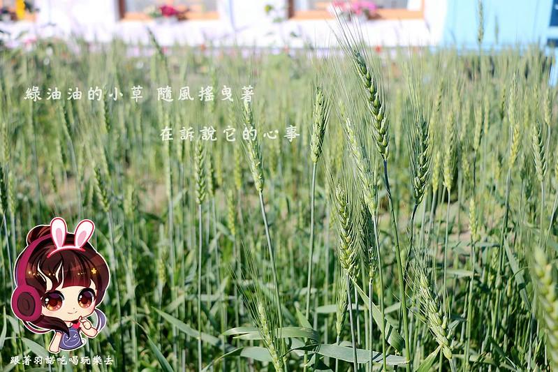 晁陽綠能體驗農場107
