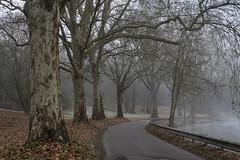 La route du canal (Lucille-bs) Tags: europe france bourgognefranchecomté bourgogne dijon canal arbre nature brouillard route canaldebourgogne automne feuillesmortes