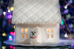 Merry Christmas Eve 🎄 (Dotsy McCurly) Tags: crazytuesday festivelights hct happycrazytuesday handmade paper house embossed christmas holiday lights canoneos80d efs35mmf28macroisstm