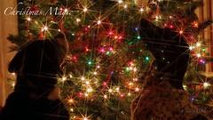Christmas Magic (Sandra Mahle) Tags: christmas dogs canine canon canonphotography december