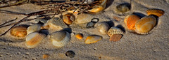 SHELL TRAIL (Wolf Creek Carl) Tags: shore shells seashells ocean beach stgeorgeisland statepark stgeorgeislandstatepark florida outdoors nature