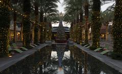 Reflections of Christmas (Ron Drew) Tags: nikon d800 scottsdale arizona scottsdalequarter mall reflection christmas christmastree lights palms twilight holiday pool
