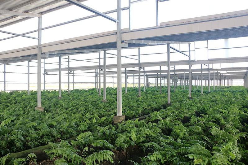 晁陽綠能體驗農場132