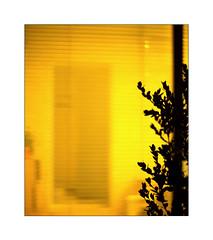 Noël au No-Man's-Land - sur 'la Véranda' (Armin Fuchs) Tags: arminfuchs nomansland lavéranda yellow 6x7 tree light night anonymousvisitor thomaslistl wolfiwolf jazzinbaggies niftyfifty noël
