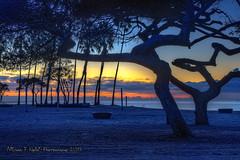Twisty Trees (Michael F. Nyiri) Tags: cabrillobeach sanpedro california southerncalifornia sunrise