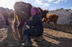 Chores - Western Mongolia (bobglennan) Tags: philadelphiaphotographer findingtheshot beyondtheview timing mongolianlife mongolia life lifestyle light pastoral herdinglife kazakhlife measuringlife traveladventure