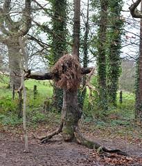 winter witch (conall..) Tags: sculpture temporary witch rowallane national trust saintfield walled garden northernireland nikon afs nikkor f18g lens 50mm prime primelens nikonafsnikkorf18g