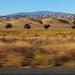 BAKERSFIELD, CALIFORNIA 34
