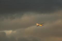 Gone into the sky (Teruhide Tomori) Tags: boeing777 ボーイング777 flight 飛行機 航空機 旅客機 大阪国際空港 伊丹空港 千里川土手 大阪 日本 ジェット機 airport airplane jet plane osakainternationalairport aircraft thebankofsenririver 空 sky itamiairport ana allnipponairways 全日空