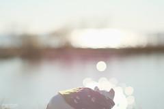おさんぽこうた -じゅうとむっつめお話し- (atacamaki) Tags: xt2 supertakumar 55mm f18 fujifilm oldlens オールドレンズ スーパータクマー jpeg撮って出し atacamaki walter ウォルター pig こぶた story 霞ヶ浦 lake water sunny day life こぶたのウォルター bokeh