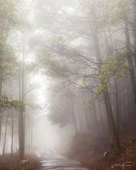 Merry Christmas to all 🎄🍂🎄😊 (jorgeverdasca) Tags: autumn trees road woodland landscape forest nature mist goth fog sintra portugal