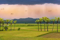 _MG_9998.0512.TL505.Tĩnh Gia.Thanh Hoá (hoanglongphoto) Tags: asia asian vietnam landscape scenery vietnamlandscape vietnamscenery vietnamscene sky clouds fields harvest ricefields tree trees palmtree palmtrees thanhhóa tĩnhgia phongcảnh bầutrời mây nhữngđámmây cánhđồng cánhđồnglúa lúachín mùagặt câykè nhữngcâykè mâygiông canon northcentralvietnam afternoon buổichiều seasonharvest ruộnglúa tĩnhgiamùalúachín tĩnhgiamùagặt hoanglongphoto cơngiông phongcảnhtĩnhgia thanhhoalandscape thuderstorms thuderstormclouds giôngbão blues canoneos5dmarkii canonef70200mmf28lisiiusm happyplanet asiafavorites