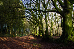 Two roads diverged in a wood and I.........  - Hembury Fort, Honiton, Devon - Dec 2019 (Dis da fi we) Tags: hembury fort honiton devon scheduled monument circuit defences english heritage neolithic period iron age roman army robert frost tworoadsdivergedinawoodandi all the difference less made roads took traveled two wood