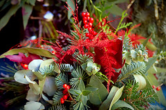 Green & Red for Christmas Day (Fnikos) Tags: flower flowers flor flores fiore fiori nature naturaleza natura leaf leaves color colour colores colours colors red green dark light shadow shadows dof depth depthoffield bokeh outside outdoor