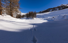 Footprints (Pierluigi Gualano Photography) Tags: footprints snow neve italy italia valledaosta lake cervino valley alps landscape alpi europe nature land mountain footprins naturecolors white trees ice color mount nikond850 sigm art sigmaart 14mm