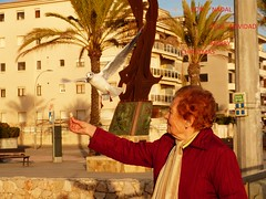 Paz y Amor (calafellvalo) Tags: navidad gavina gaviota paz pau amor salud salut christmas love aves armonía calafellvalo