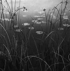 Behind (fromfarbeyond) Tags: handen sweden monochrome film analog 6x6 photography mediumformat bw lake grain nature water redfilter asa3200 delta ilford 500cm hasselblad