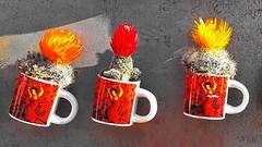 España olé (gerard eder) Tags: world travel reise viajes europa europe españa spain spanien flowers flores flora blumen blüte blossom cup cactus kakteen souvenir regalo