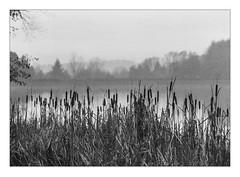 Foggy morning at Lake Kell (werner-marx) Tags: analog film meinfilmlab 35mm canonftb ilforddelta3200 kellamsee lakekell fog foggy mist filmgrain