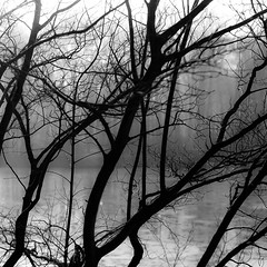 Forest In Fog 017 (noahbw) Tags: captaindanielwrightwoods d5000 dof nikon abstract blackwhite blackandwhite blur branches bw depthoffield forest landscape monochrome natural noahbw pond silhouette square tree trees water winter woods