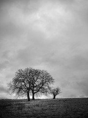 Trees on a hill (Deepmike70) Tags: landscape nature sky clouds branch tree grass agriculture field blackandwhite pentax 645z bw