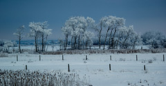 Hoarfrost (Koku85 (Thanks for 1 million views)) Tags: travel winter roadside trees nature snow canada christmas landscape