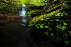 Irurrekaeta primaveral (Fotografias Unai Larraya) Tags: paisajes naturaleza salvaje valledearce irurrekaeta plantas agua cascadas largaexposición bosque primavera hojas arboles ngc