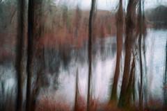 The Pond Through the Trees no.2 (DavidSenaPhoto) Tags: fujinon35mmf14 trees multipleexposure icm intentionalcameramovement pond water fuji impressionisticphotography xt2 lake clouds fujifilm impressionism painterly
