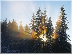 :Raÿze: ([JBR]) Tags: soleil sol sun rays brume niebla foret forest tree arbre arbol winter montagne mountain montaña cold froid frio lagiettaz leplanlagiettaz savoie france francia neige nieve snow hiver alpes alps jbrphoto jbrphotography pentax k5ii light luz lumiere daylight naturaldaylight lumierenaturelle nature naturaleza ciel cielo sky blanc blanco white flickrunitedaward