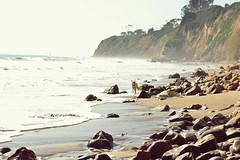 Heaven is a place where everyone is playing. pt. II (catarinae) Tags: heaven is place where everyone playing labrador dog running beach sea shore stones santa barbara california travel sun glitter sparkle waves